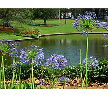 Agapanthus & Natural Dam Photographic Print