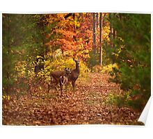Autumn Doe and Fawn Poster