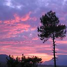 Purple and Pink Sunset Over Akyaka Sakartepe  by taiche
