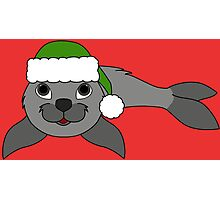 Gray Baby Seal with Christmas Green Santa Hat Photographic Print