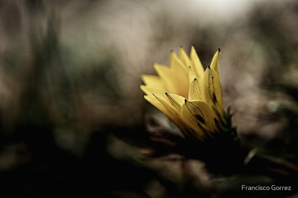 Flowers by Francisco Gorrez