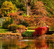 Secret Garden - Mount Wilson  # 7 , NSW Australia - The HDR Experience by Philip Johnson