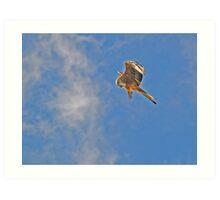 Red Kite Art Print