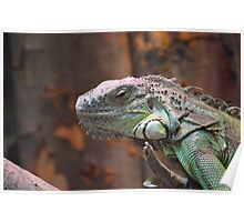 Beautiful peaceful Iguana Lizard sitting on a tree. Poster