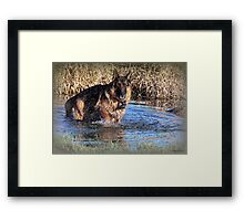 Doggy  Paddle Framed Print