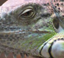Beautiful peaceful Iguana Lizard sitting on a tree.  Sticker