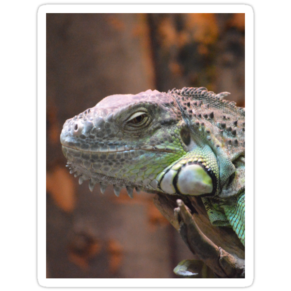 Beautiful peaceful Iguana Lizard sitting on a tree.  by BFN1978