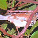 Bird way up on a limb by ♥⊱ B. Randi Bailey