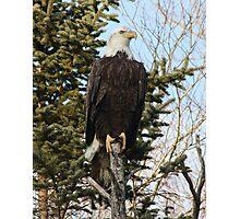Bald Eagle 3 Photographic Print