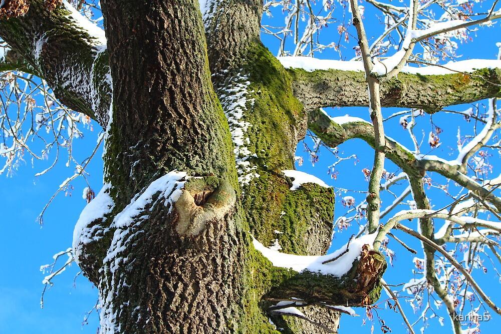 Time-Honoured Tree by karina5