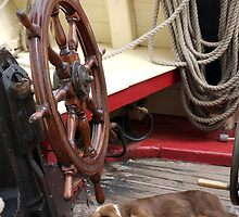 Sleeping dog onboard Classic boat, Brest 2008 Maritime Festival, Brittany, France by silverportpics