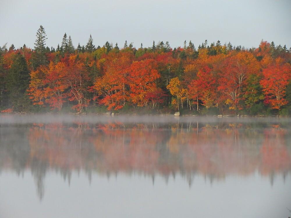 Fall glory by Nicole Gushue