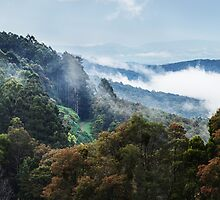 Yarra Ranges, Australia by WavesPhotograph