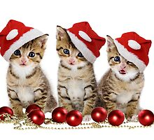CHRISTMAS KITTENS PRINT by fine-art-prints