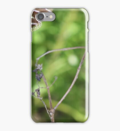 Zebra Longwing Butterfly (Heliconius charitonius) iPhone Case/Skin