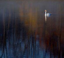 Autumn Swan by timmcmurdo