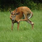 Deer Itch by MarquisImages