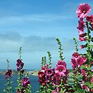 Beautiful pink flowers by the river estuary, Le Conquet, Brittany, France by silverportpics