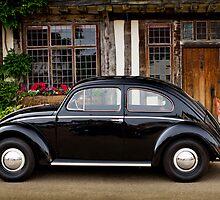Oval window beetle by bandwagen
