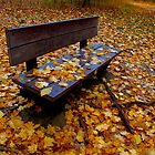Alone with the leaves by MarianBendeth