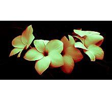 Plumeria dark Photographic Print