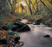 SILKY STREAM by Rob  Toombs