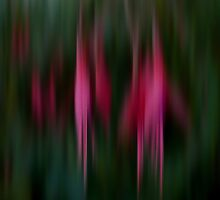 Abstract Flowers by Jess Meacham