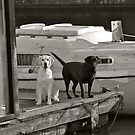Dogs on the Dock by Becky Hagan
