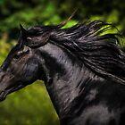 Merens Stallion 2 by Sue Ratcliffe