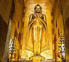 Buddhas by Nicole Shea