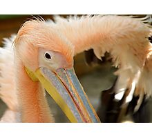 Awesome Pelican Bird Photographic Print
