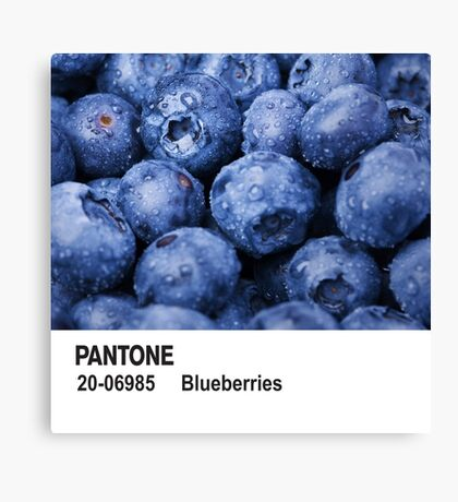 Pantone - Blueberries Canvas Print