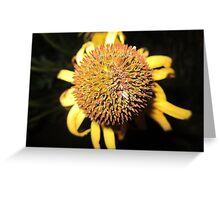 Ball of Beauty Greeting Card