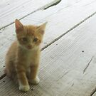 My kitten named Cheese by Anne Guimond