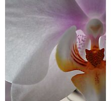Orchid squared Photographic Print