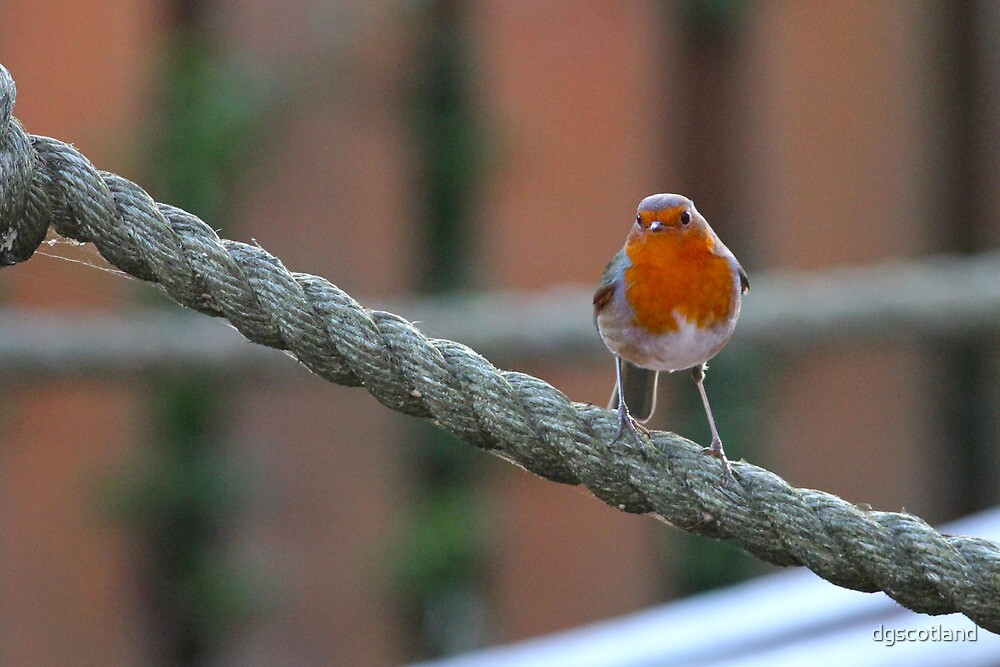 Red Breast by dgscotland