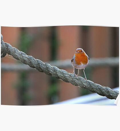 Red Breast Poster
