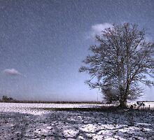 Let it Snow  by Rob Hawkins
