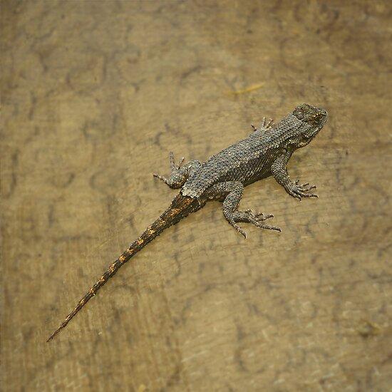 Little Dragon by Jess Meacham
