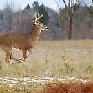 Buck on the Run 3 by Jim Cumming