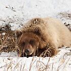 The Grizzly Cub by Chris  Gale