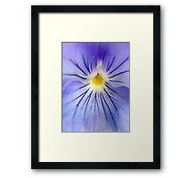 Flower Yolk Framed Print