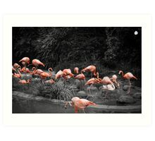 A Touch Of Flamingo Art Print