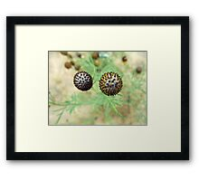 Spiky Balls Framed Print
