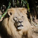 King of The Zoo by Chuck Coniglio