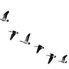 B&W Geese by Jake Kauffman