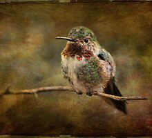 Beautiful Bird by Barbara Manis