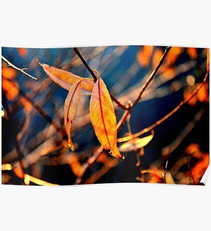 A Single Leaf Poster