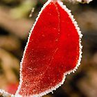 Last Leaf of November by Harv Churchill