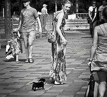 Puppy Follow Me Please by Mick Kupresanin